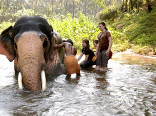 "F.Elephant Package  ""An Experience You'll Never Forget"""