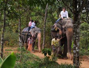 elephant ride thekkady 3
