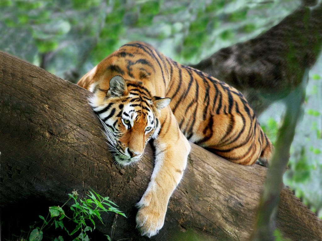 8A.Periyar Tiger Trail ( Saturday (two night )  , Tuesday , Thursday (one Night)