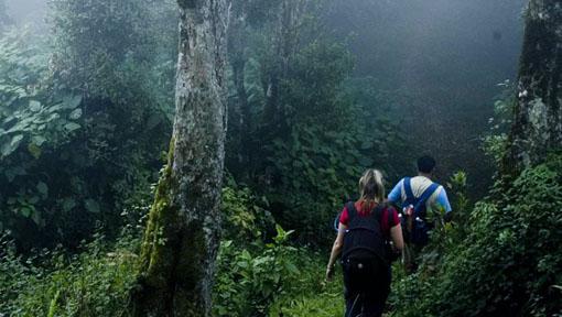 12A. Nature Walk - Excitement & Revivification(7.00 AM,7.30AM,10.00AM,10.30AM,11.00AM,11.30AM,2.00PM,2.30PM)