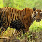 Tiger trail Thekkady